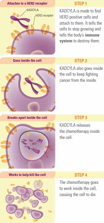 How does Kadcyla work?